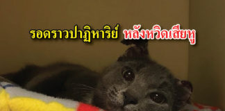 แมว ถูกทารุณ