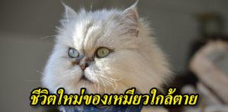 แมว ขนสวย
