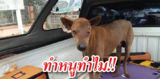 สุนัข ถูกมีดฟันตาบอด