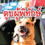 สุนัข ตำรวจ ถูกมีดแทง