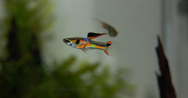 ปลาสวยงาม