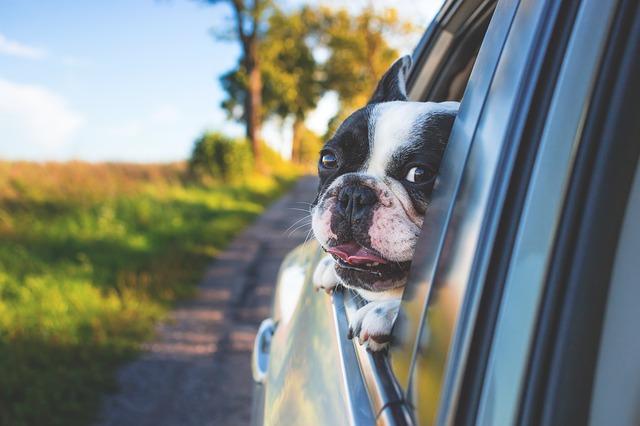 สุนัข เมารถ
