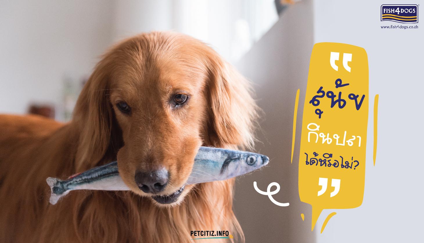 สุนัขกินปลา